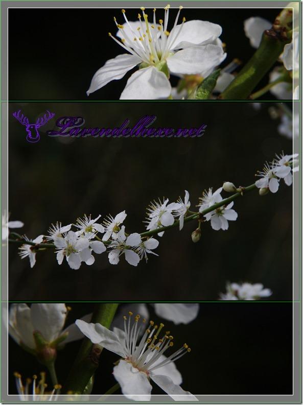 aprilblüten1