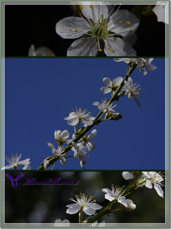 aprilblüten2