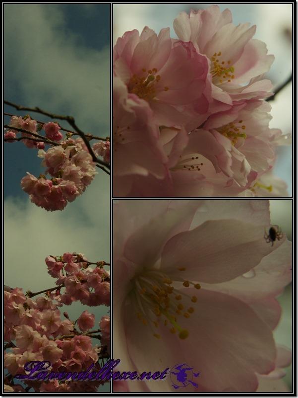 aprilblütenrosa