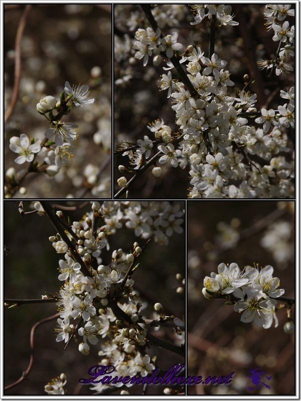 aprilblumen2