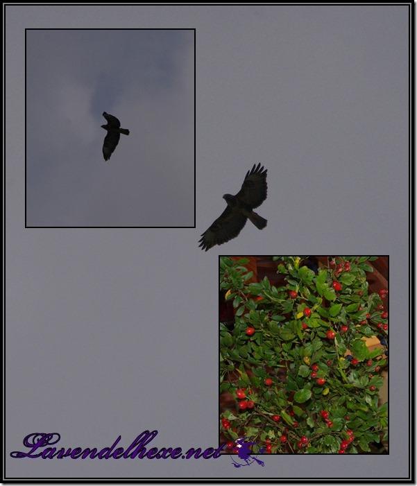 septembervogel