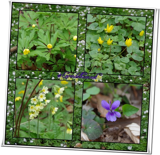 aprilblumen