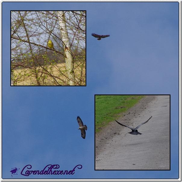 aprilvögel
