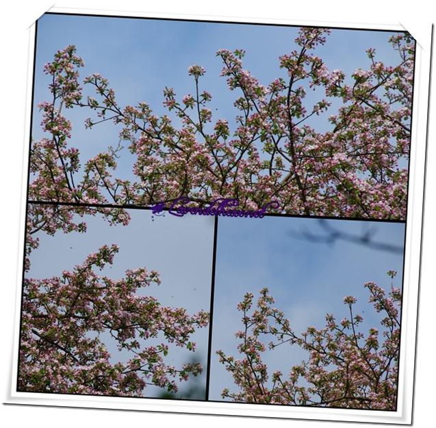 maiblüten1