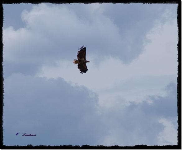 augustvogel1