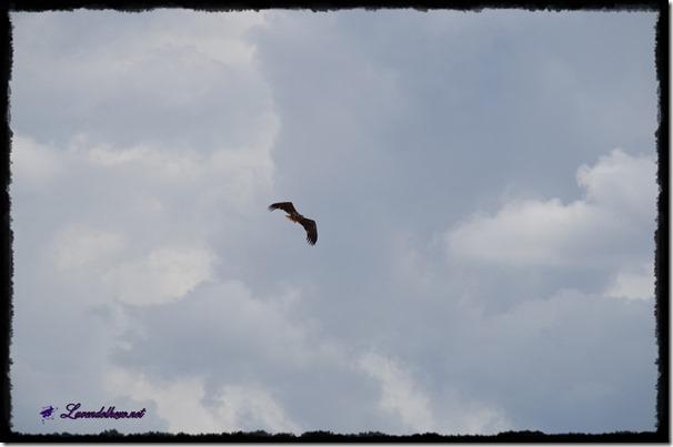 augustvogel2