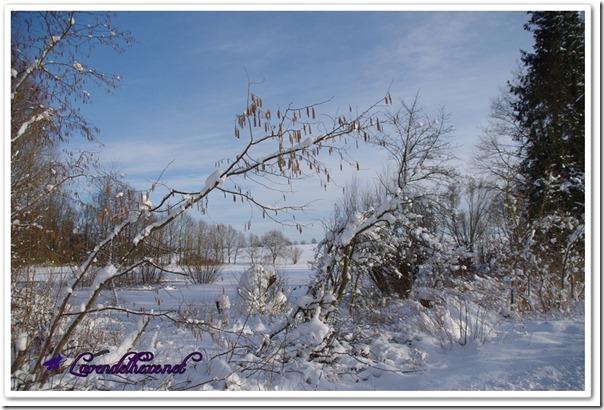 februarschnee2