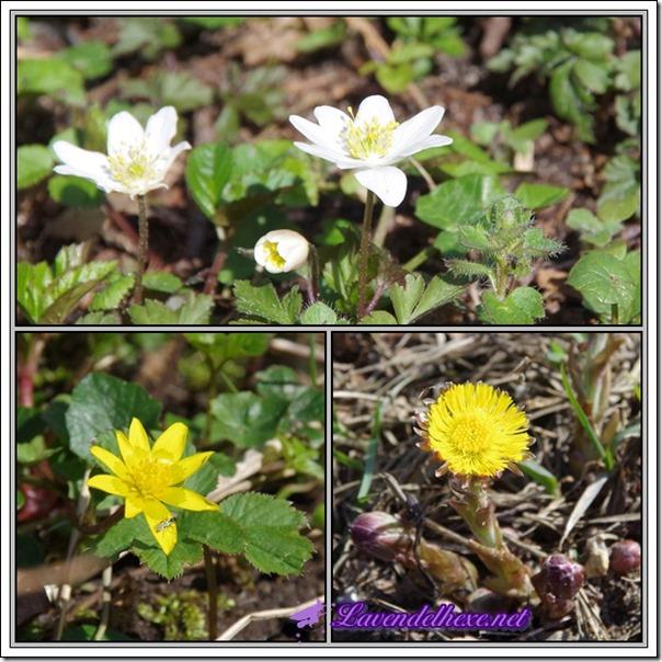 aprilblüten