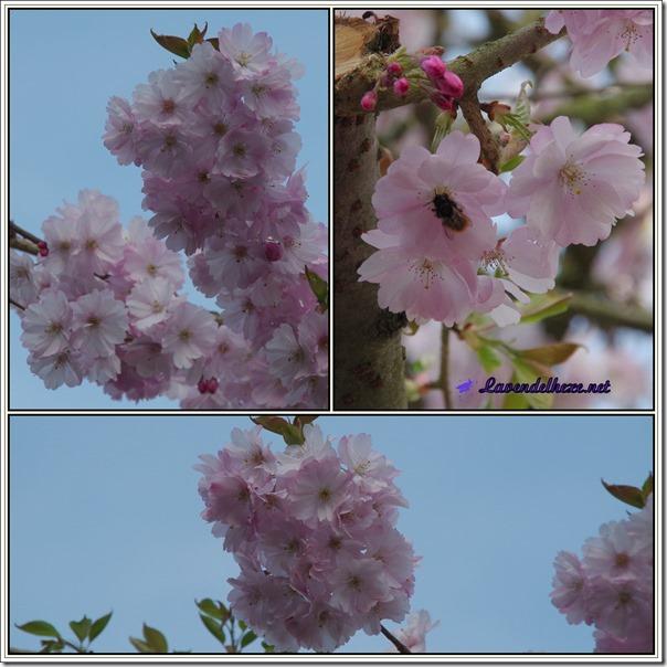 aprilrosa3