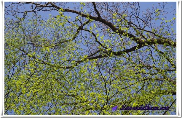 aprilwald3