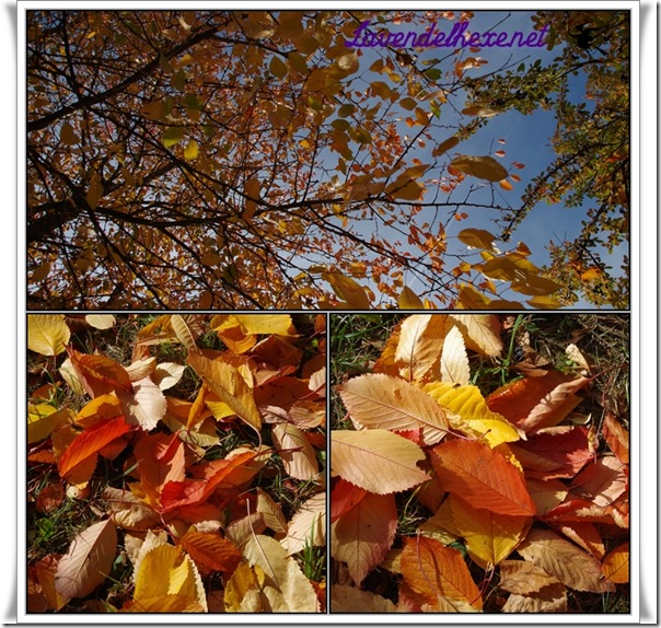 oktoberherbst4