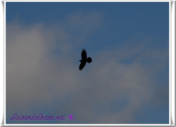 januarvogel1b