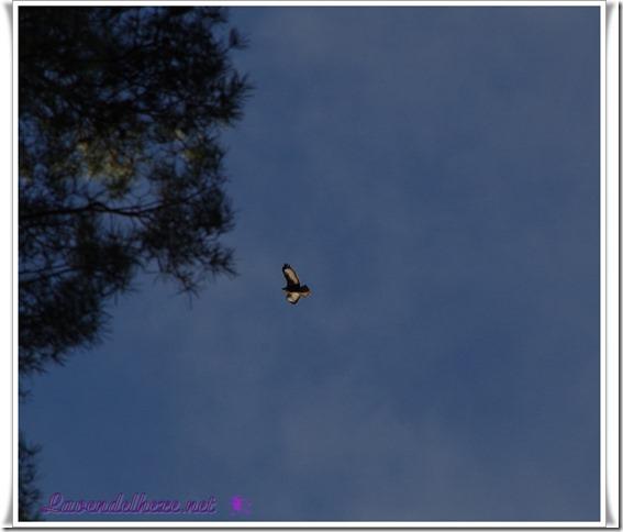januarvogel2