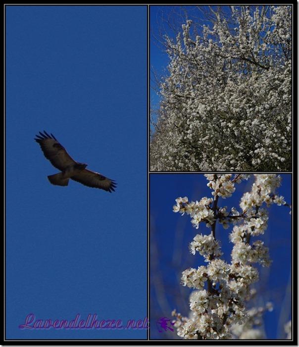 aprilblüten4