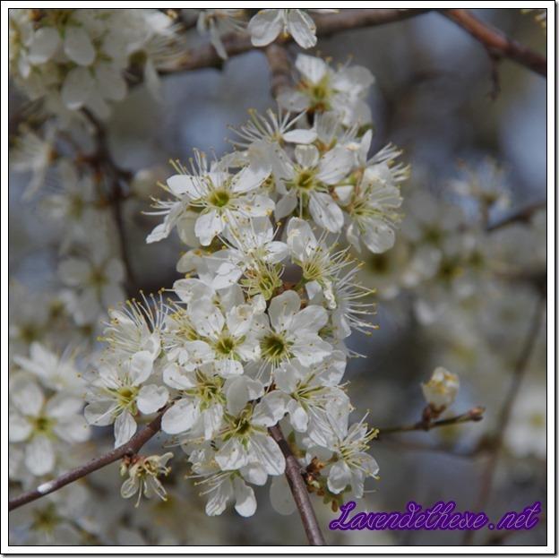april blüten 1