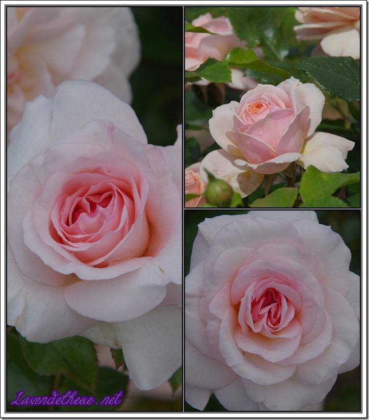 juni rosen4