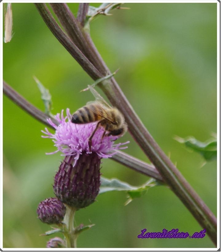 juli bienen 1