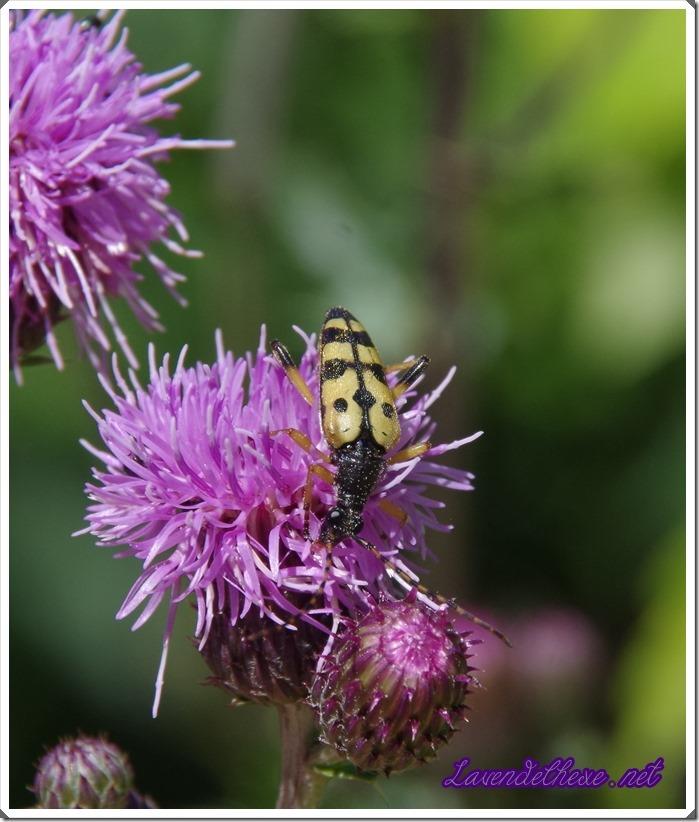 juli bienen 3