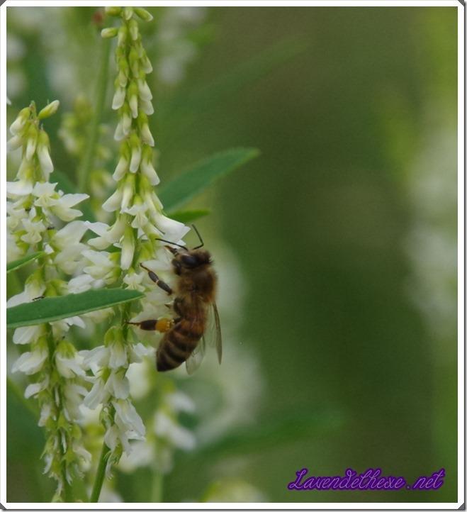 juli bienen 8