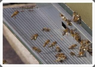 Die Bienen summen