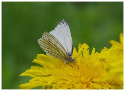 Schmetterlinge und mehr