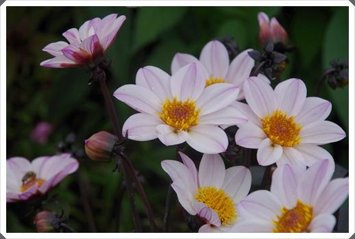 Blumen,Blumen, Blumen