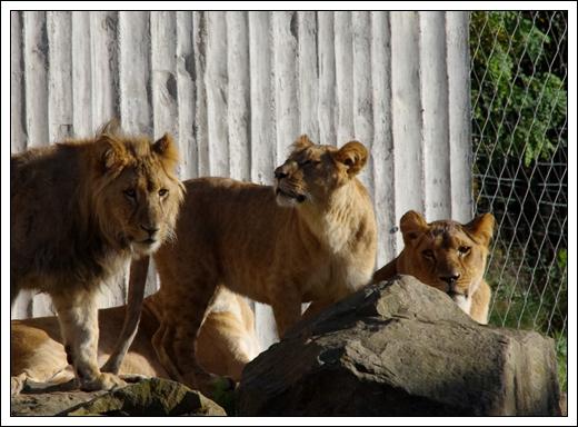 Mehr Zoo